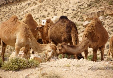 Predigt Neujahr 2019 – Glaube an Gott und binde dein Kamel fest